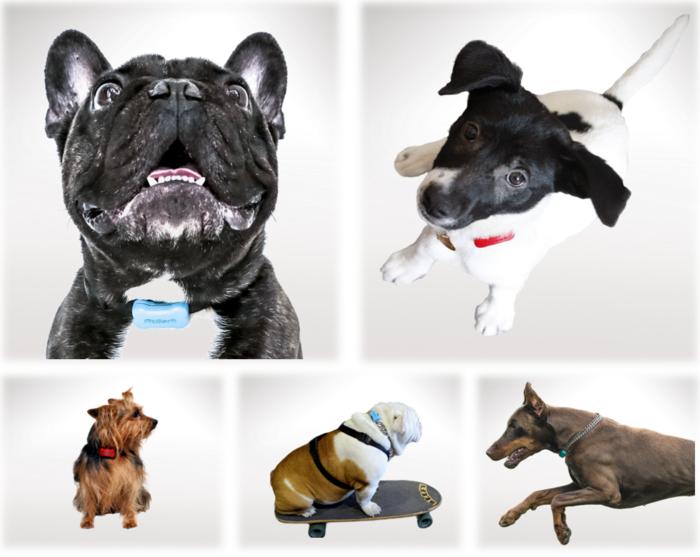 Трекер активности для собак привлек инвестиций на сумму $25 млн.: вините в этом Google